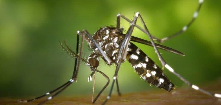 Autoridades de Salud hacen llamado ante aumento de la letalidad del dengue