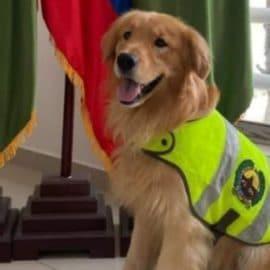 'Lasy', la perra antinarcóticos que se convirtió en el terror de los 'narcos' del Valle
