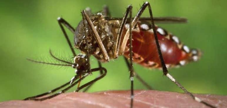 Dengue en Cali: reportan importante disminución del 60% en casos